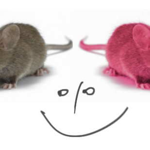 Už nechci být myška šedá obecná