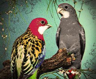 vrabec a papousek